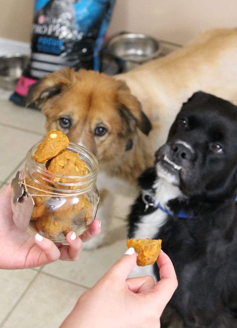 Make Homemade Peanut Butter Dog Treats