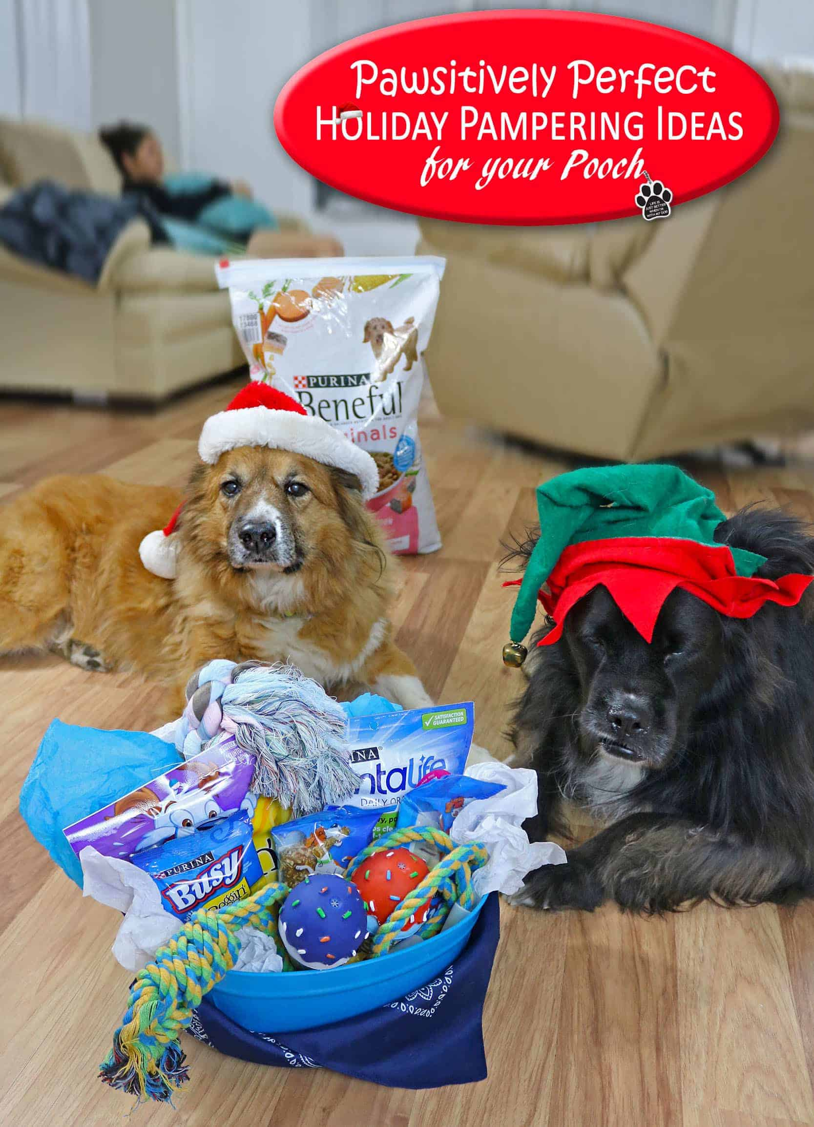 Pawsitively Perfect Holiday Pampering Ideas for your Pooch #ToPetsWithLove #AD