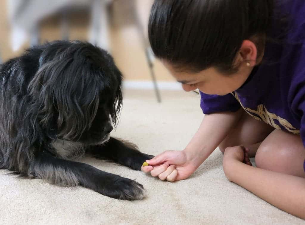 Tips on Housetraining Your Puppy