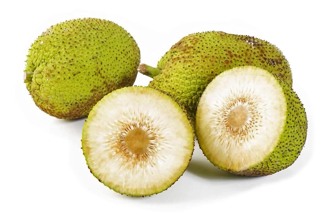 What is Breadfruit