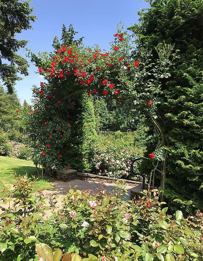 Portland Rose Garden Photo