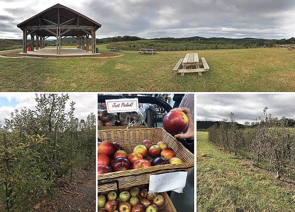 Apple orchard in blue ridge, ga