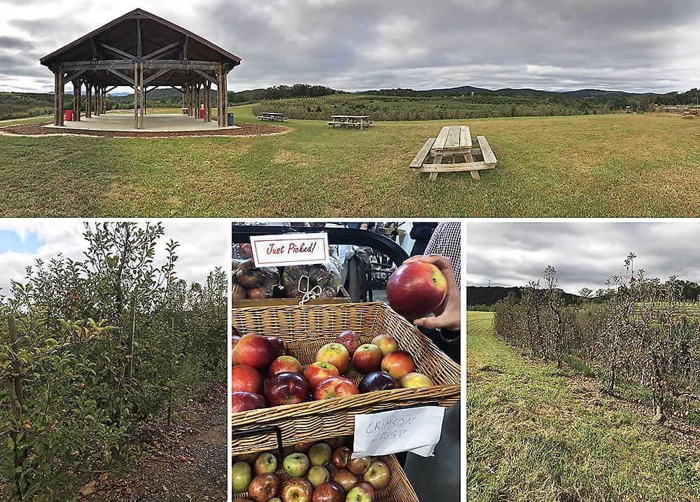 Apple orchard in blue ridge, ga