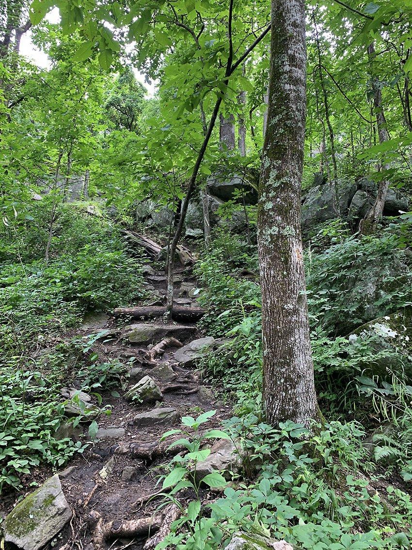 GA Trails Mt Yonah