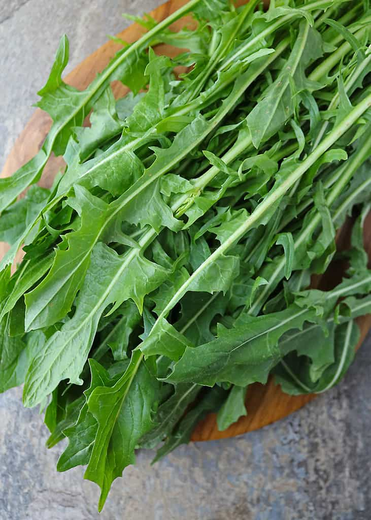 Fresh dandelion greens on a wooden platter.